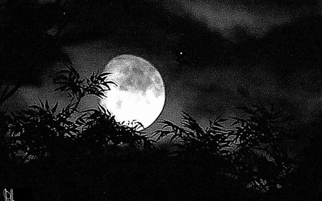 photographie-LUNE-noir-et-blanc